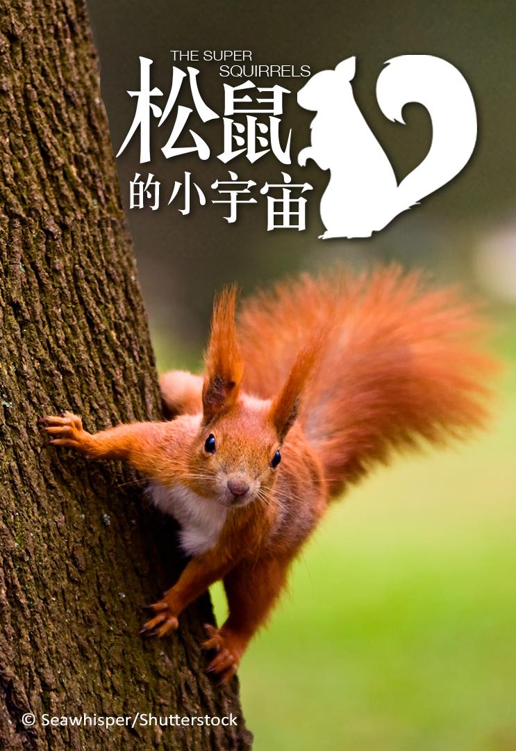 [粵語] 松鼠的小宇宙