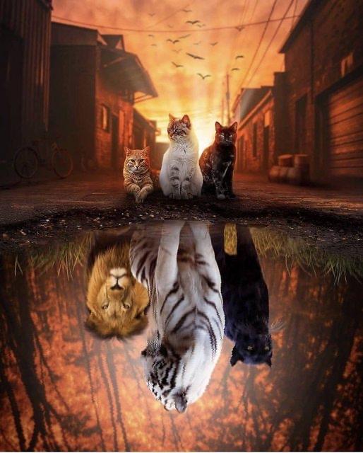 [閒聊] 老虎 已經壓不住了